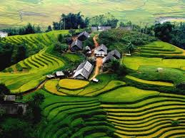 Sapa trekking tour (2days/3nights) sleep in homestay by bus